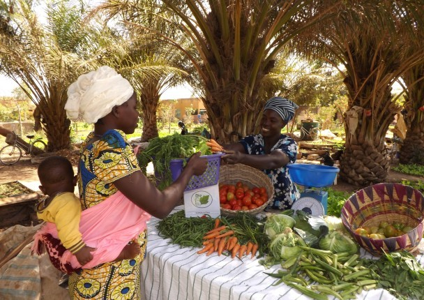 BIOINTRANT - Market Study of the Agricultural Input Sector: Mali