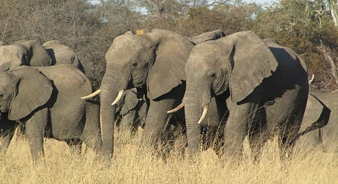 elephant_aires_protegees_foret_moz_biodiversite.jpg
